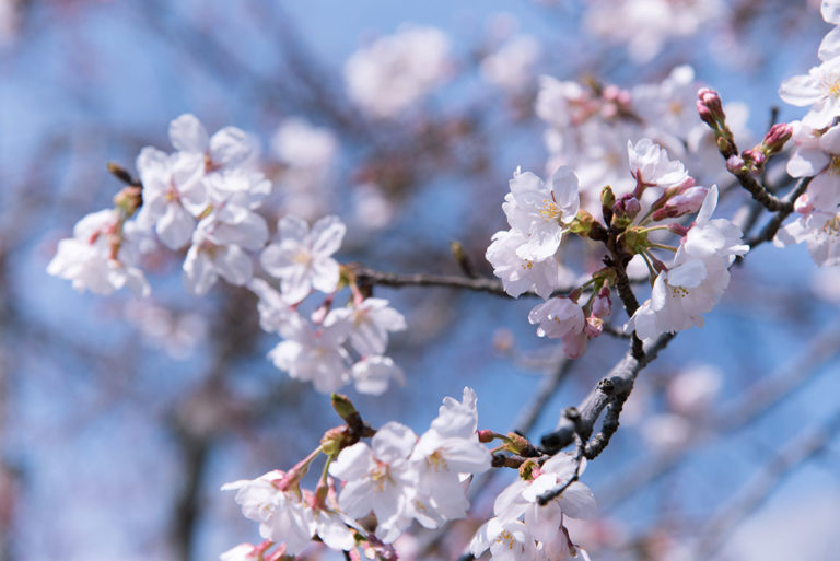 To the spring start – treat yourself and your body to a day of deceleration